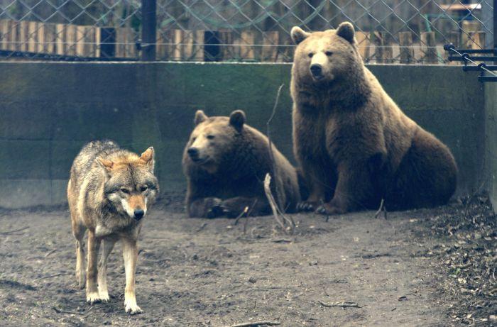 Elkészült a Szegedi Vadaspark új barnamedve-bemutatója
