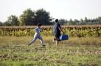 Illegális bevándorlás - Röszke