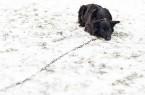 Januártól tilos kutyát láncon tartani